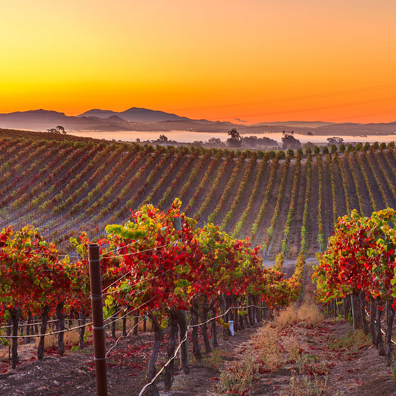 Experience<br /> California<br /> Wine Country